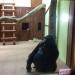 Хайден Панеттьери,Владимир Кличко,зоопарк,горилла,фото