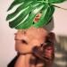 Анна Завальская, Анна Завальская фото, Анна Завальская Алиби, Анна Завальская голая, Анна Завальская голая фото
