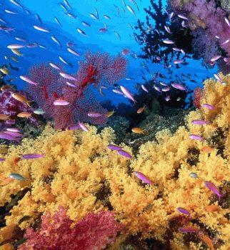 кораллы,подводный мир