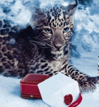 выбор вива,Cartier