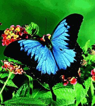 эффекты бабочек