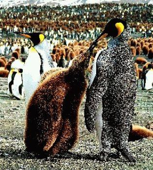 моногамные животные