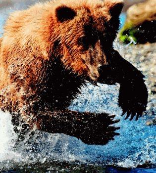 Животные%2C живущие в воде