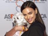 Скажи мне, кто твой друг: знаменитости и их собаки