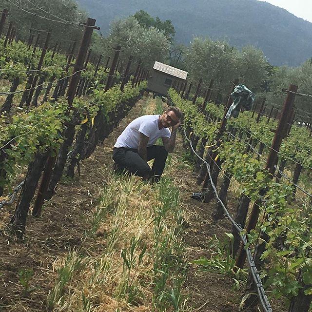 Счастливы вместе: Дэвид и Виктория Бекхэм с детьми провели выходные на винограднике