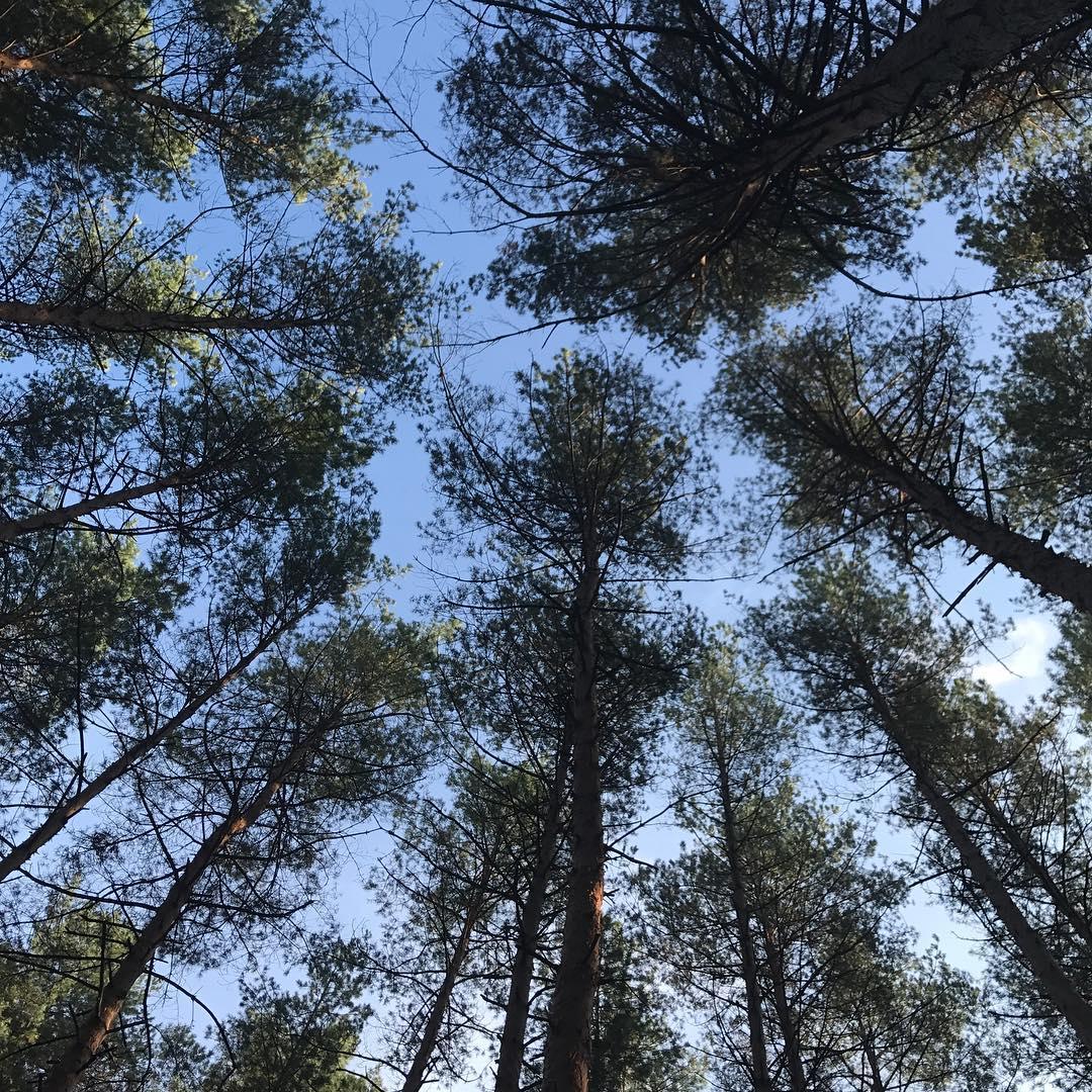 Беременная Катя Осадчая и Юрий Горбунов насладись выходными в лесу