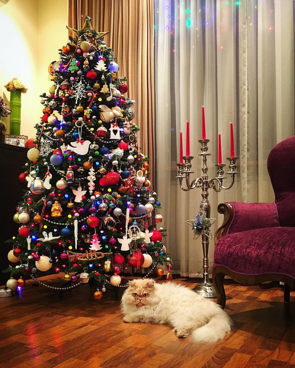 Виталий Козловский отметил Новый год со своей возлюбленной