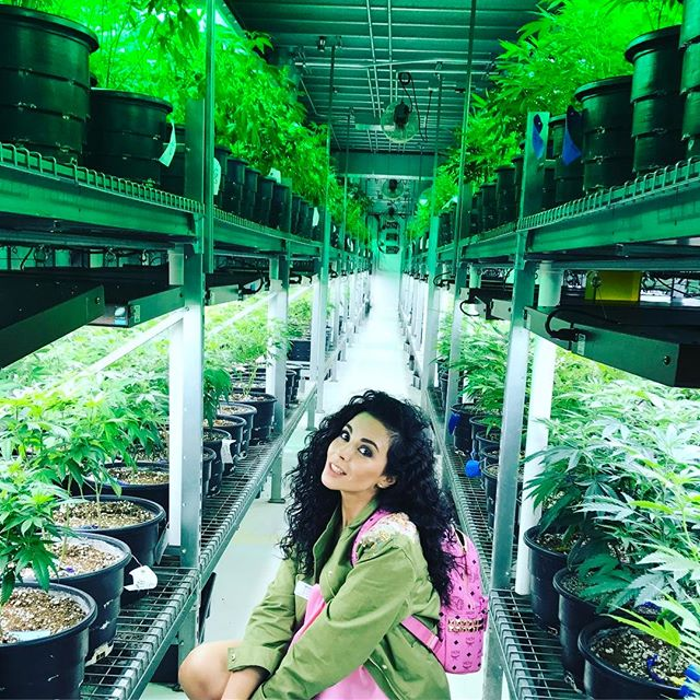 Веселая поездка: Настя Каменских и Потап побывали на заводе марихуаны
