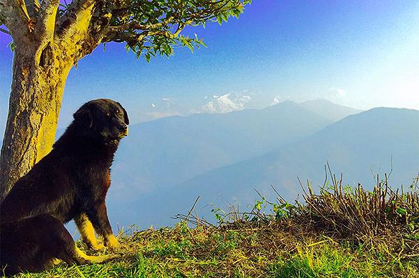 Привет из Непала: принц Гарри поделился фотографиями из личного архива