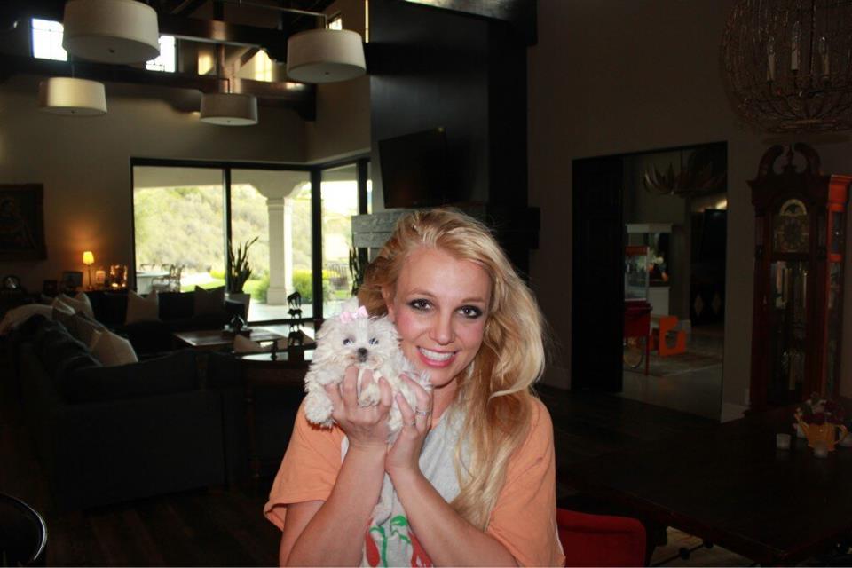 Бритни Спирс щенок
