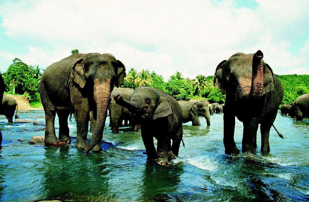 Хочу посмотреть на член слона 7 фотография