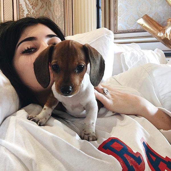 Новый любимец: Кайли Дженнер растрогала поклонников снимками с щенком