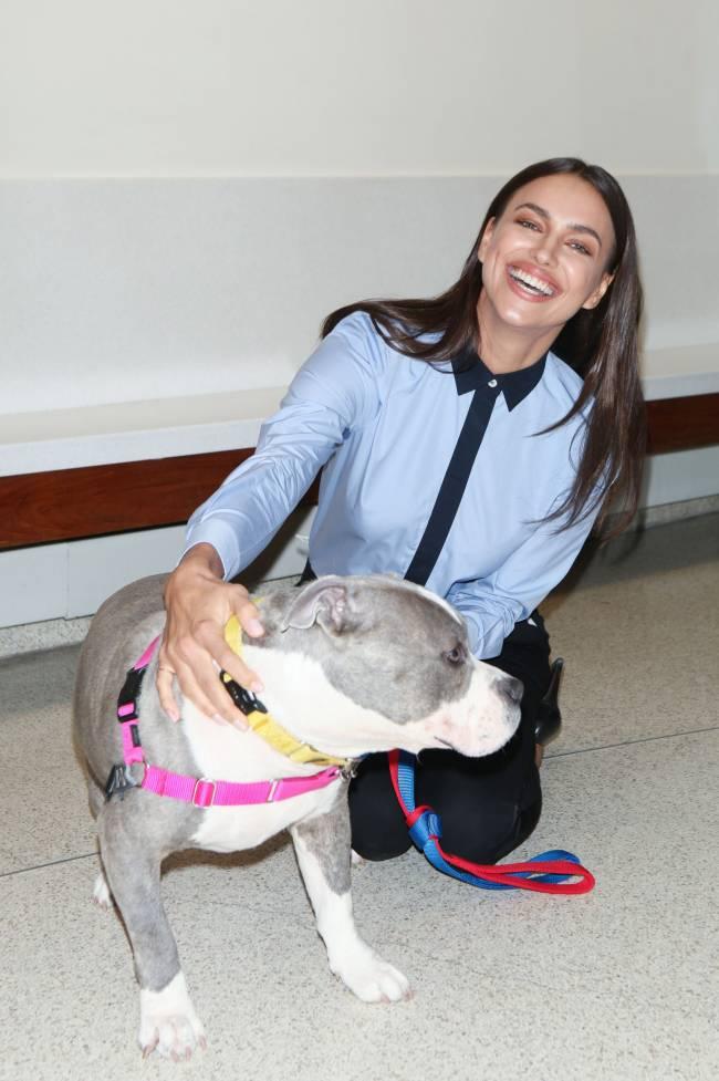 Лучше, чем мужчины: Ирина Шейк стала собачницей