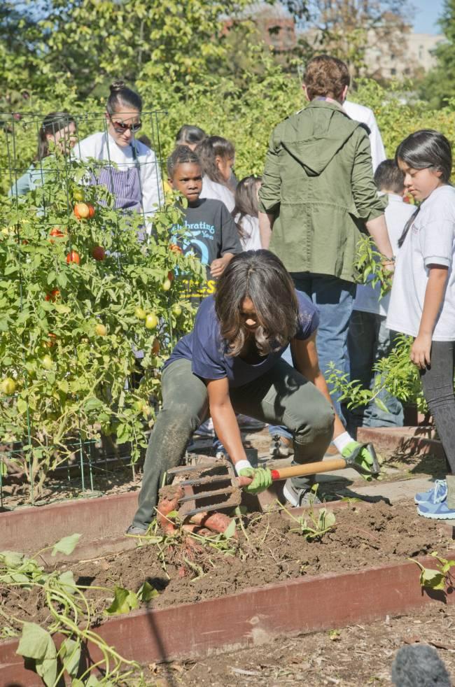 Неожиданно: Мишель Обама собирает урожай на огороде Белого дома