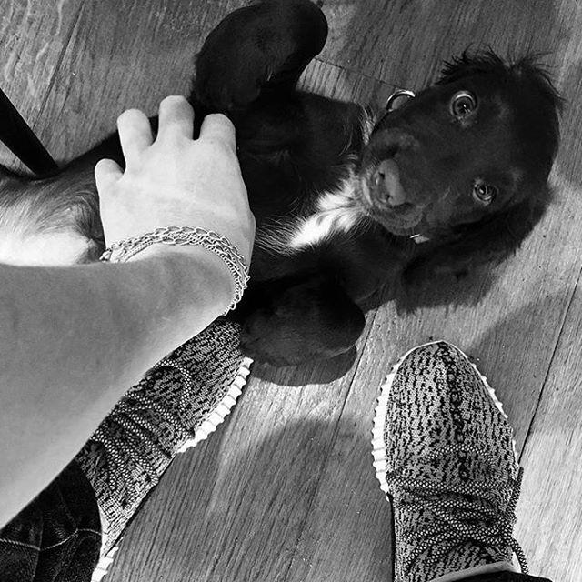 Instagram-аккаунт собаки Дэвида и Виктории Бекхэм набрал 80 тысяч подписчиков