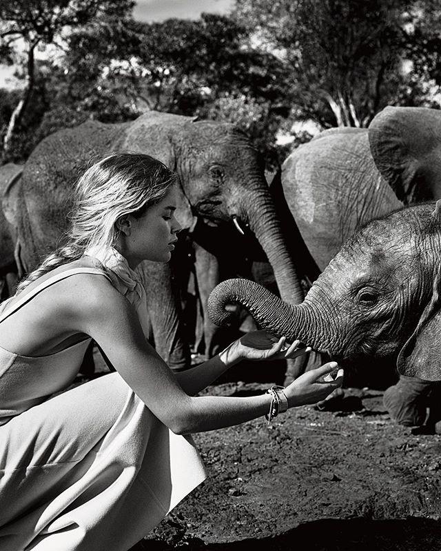 Даутцен Крус с мужем и детьми снялась в роскошной фотосессии в Африке