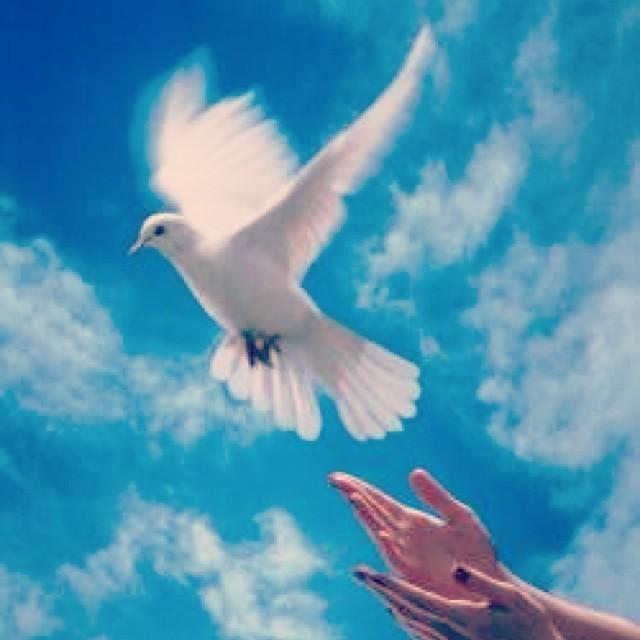 Ани Лорак призывает всех к миру