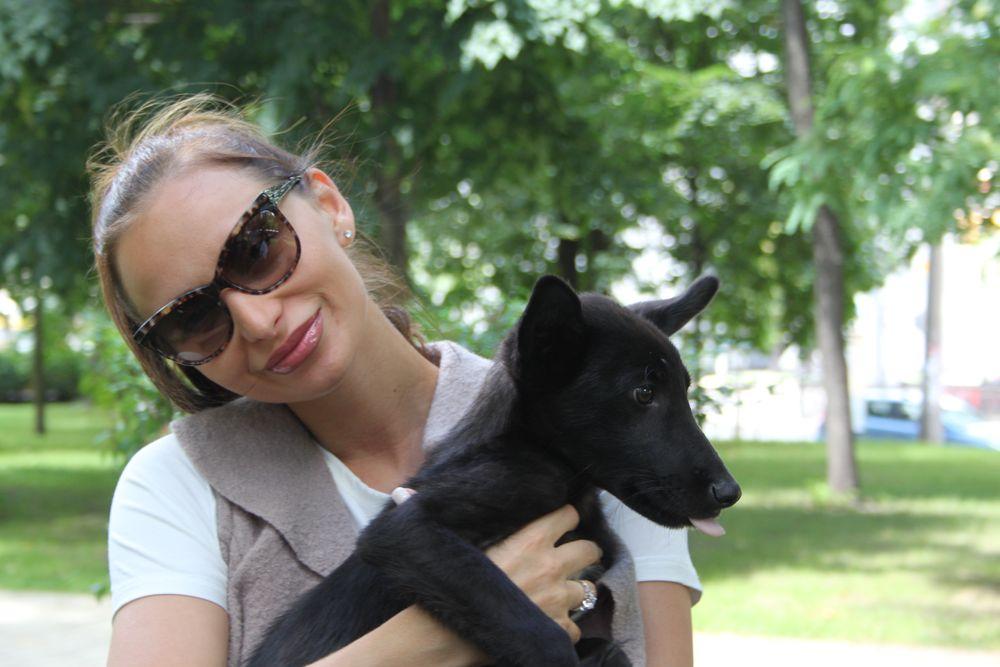 Звезды и их четвероногие друзья отпраздновали День собак