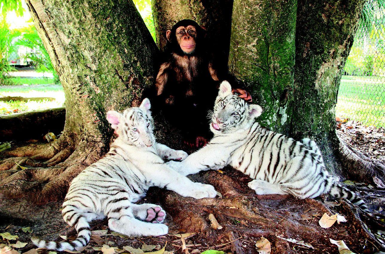 Картинки, картинки с собаками обезьянками тиграми