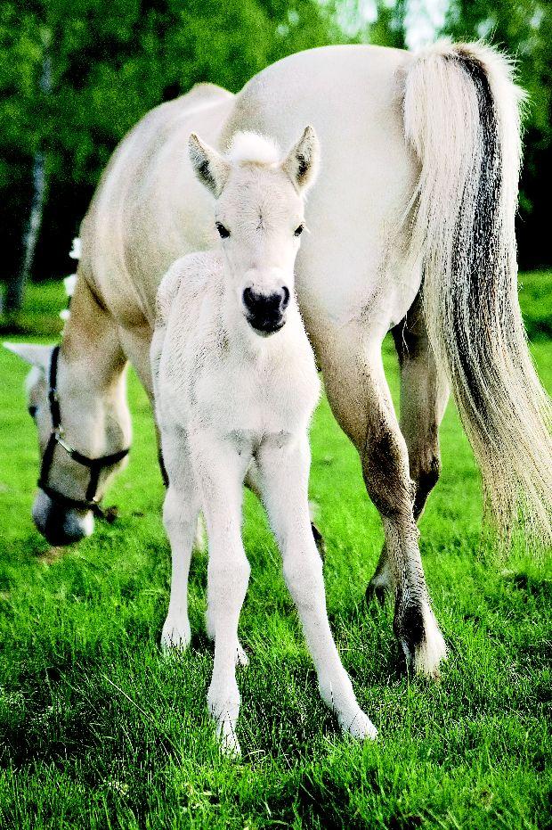 лошади разных пород фото