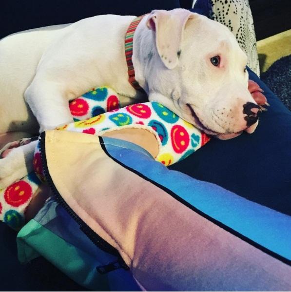 Майли Сайрус обвинили в издевательстве над домашними животными